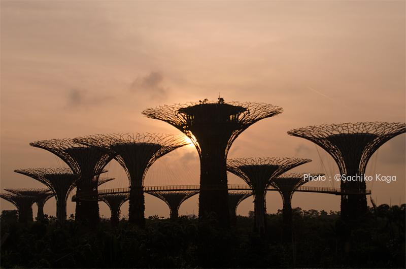 シンガポール 早朝のスーパーツリー