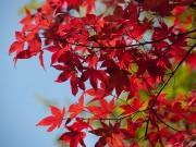 杉村公園の紅葉