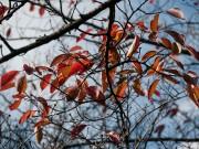 杉村公園の桜