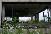 金比羅火口災害遺構