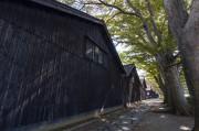 山居倉庫とけやき並木