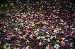 伽藍の紅葉