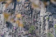 屏風岩とツツジ