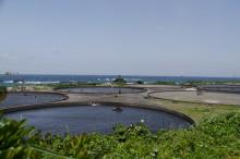 車海老養殖