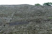水荷浦の段畑