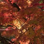 高野山の紅葉 2016