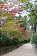 高野山 今年の紅葉