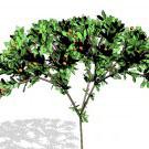 C4Dで木を作る